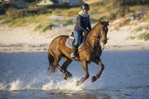 horse,photo