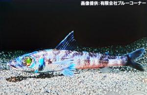 fish,photo