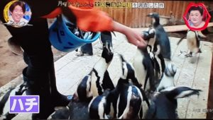 penguin,photo