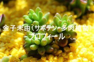 botanical,photo