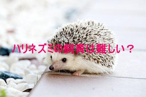 ハリネズミ 角田