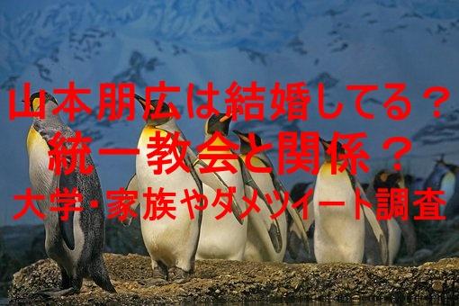penguin,photo