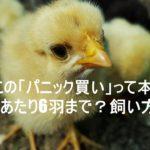 chick,photo