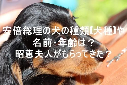dog,photo
