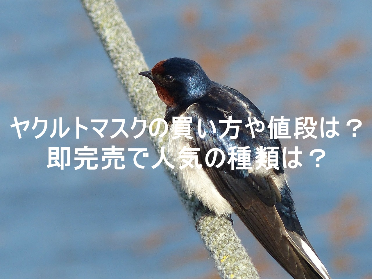 bird,photo