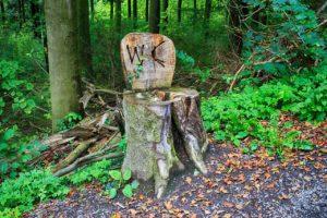 wood,photo