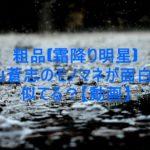 drops,photo